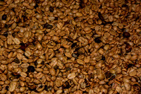 Shelled_Coffee_Beans_D72_3073