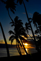 Hawaiian_Palm_Sunset_D72_3336
